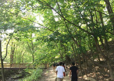 The team walking along a trail